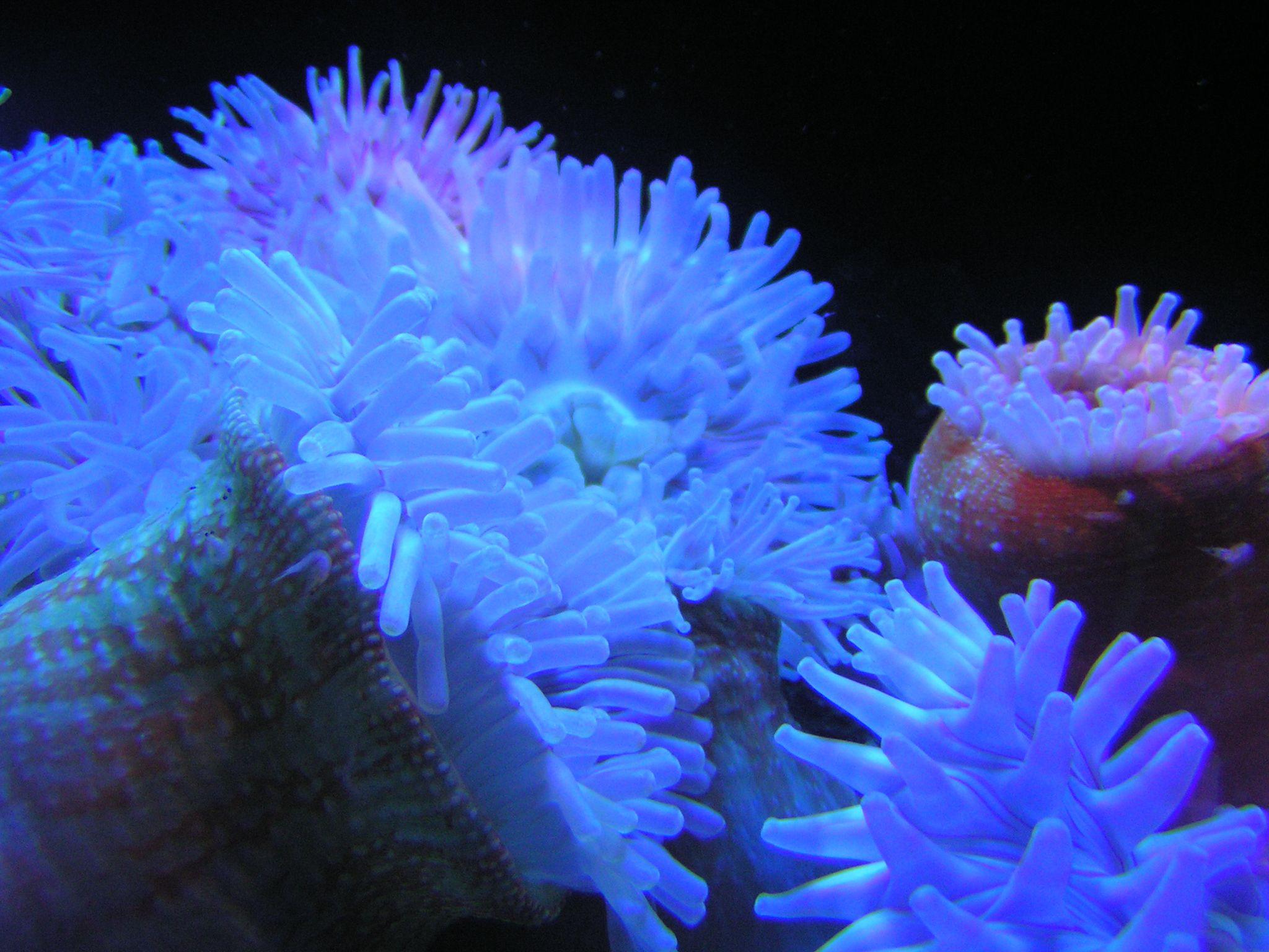 National marine aquarium plymouth for Marina aquarium