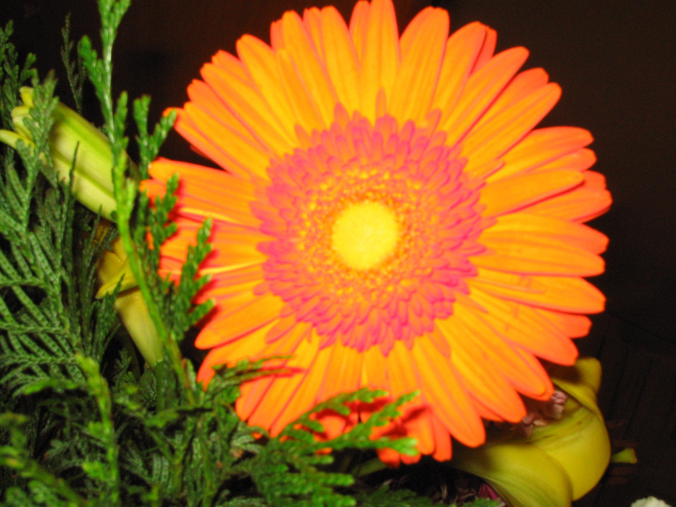 File Orange Flower Wikimedia mons