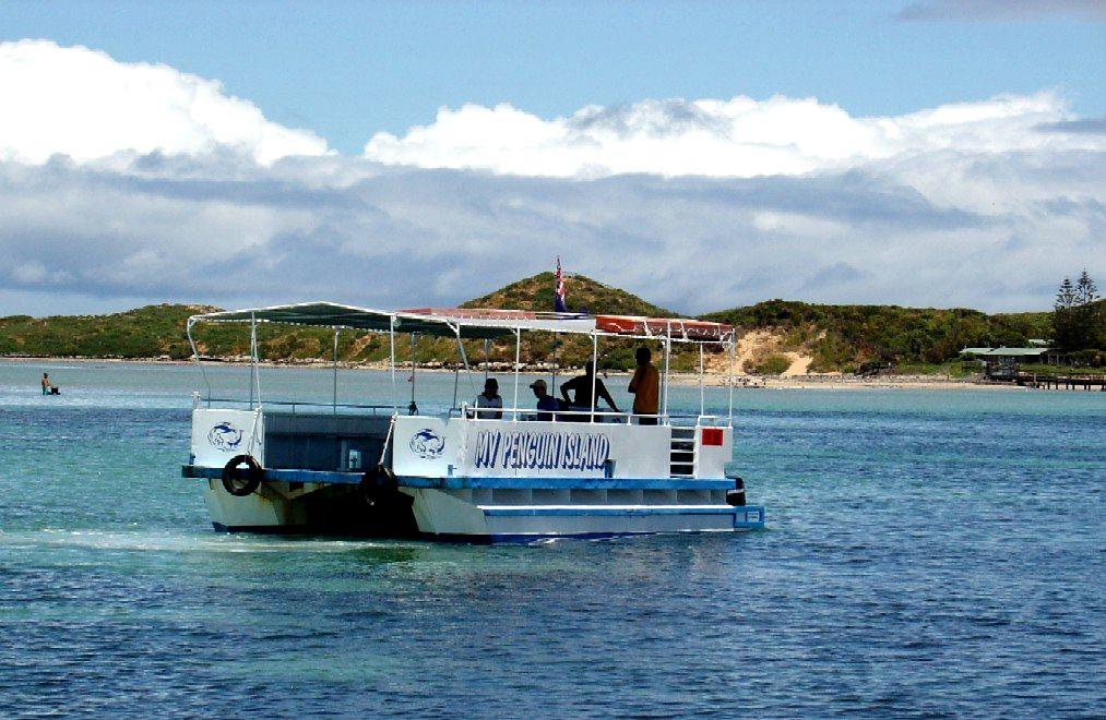 Penguin Island Western Australia Wikipedia