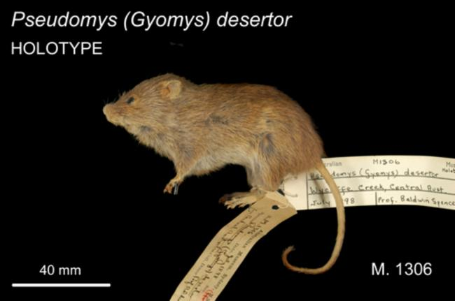 The average litter size of a Desert mouse is 3