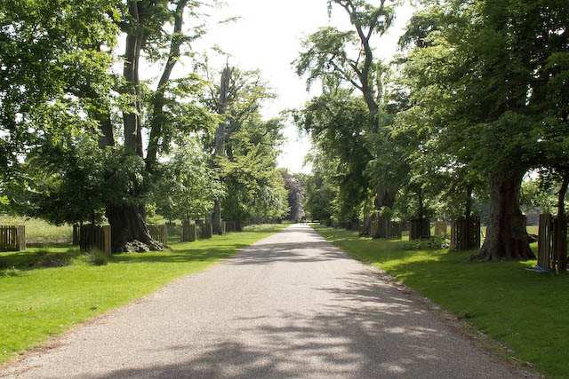 The main drive through Dunham Park (Dunham Massey) - geograph.org.uk - 447740