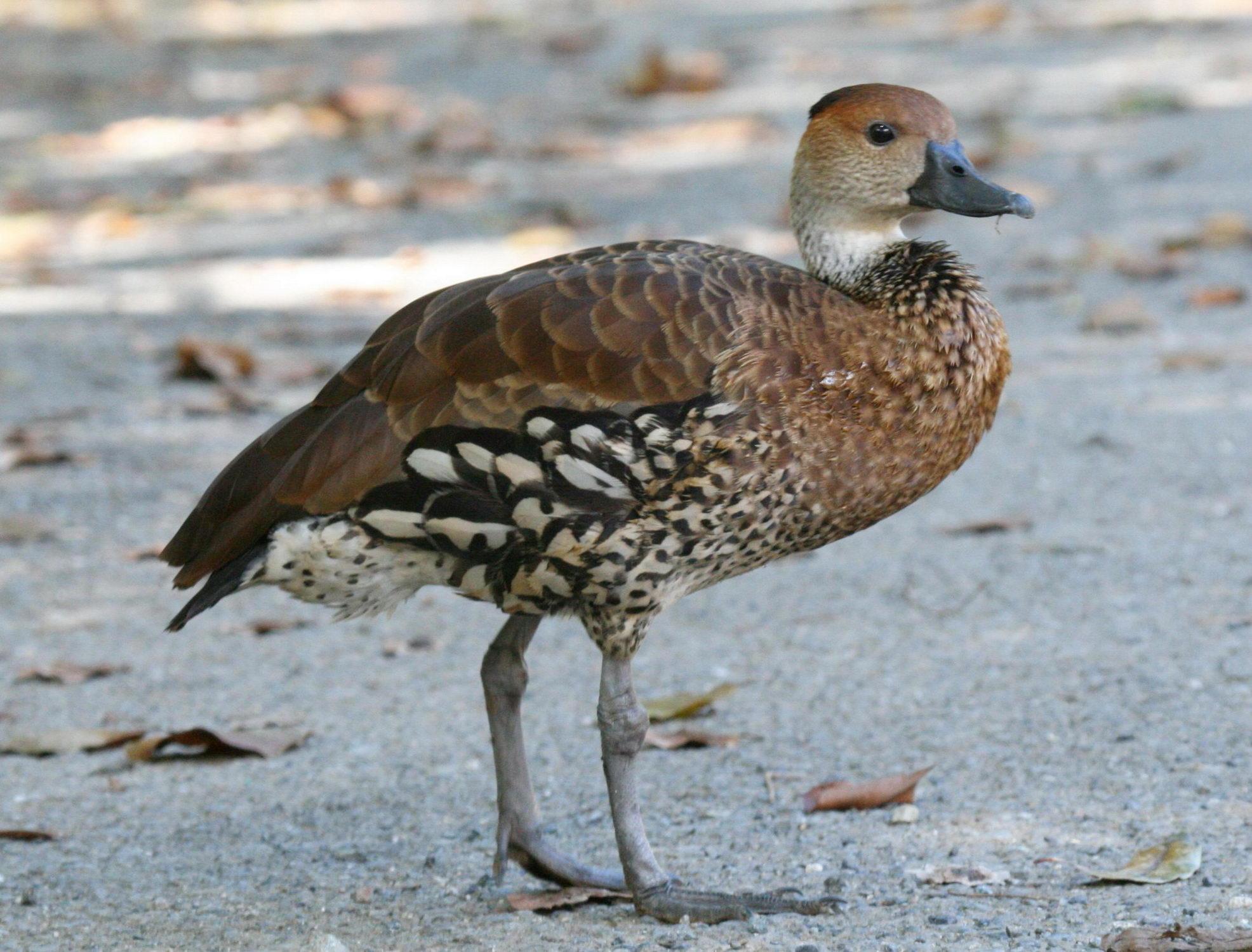 Long Island Ducks Security Jobs