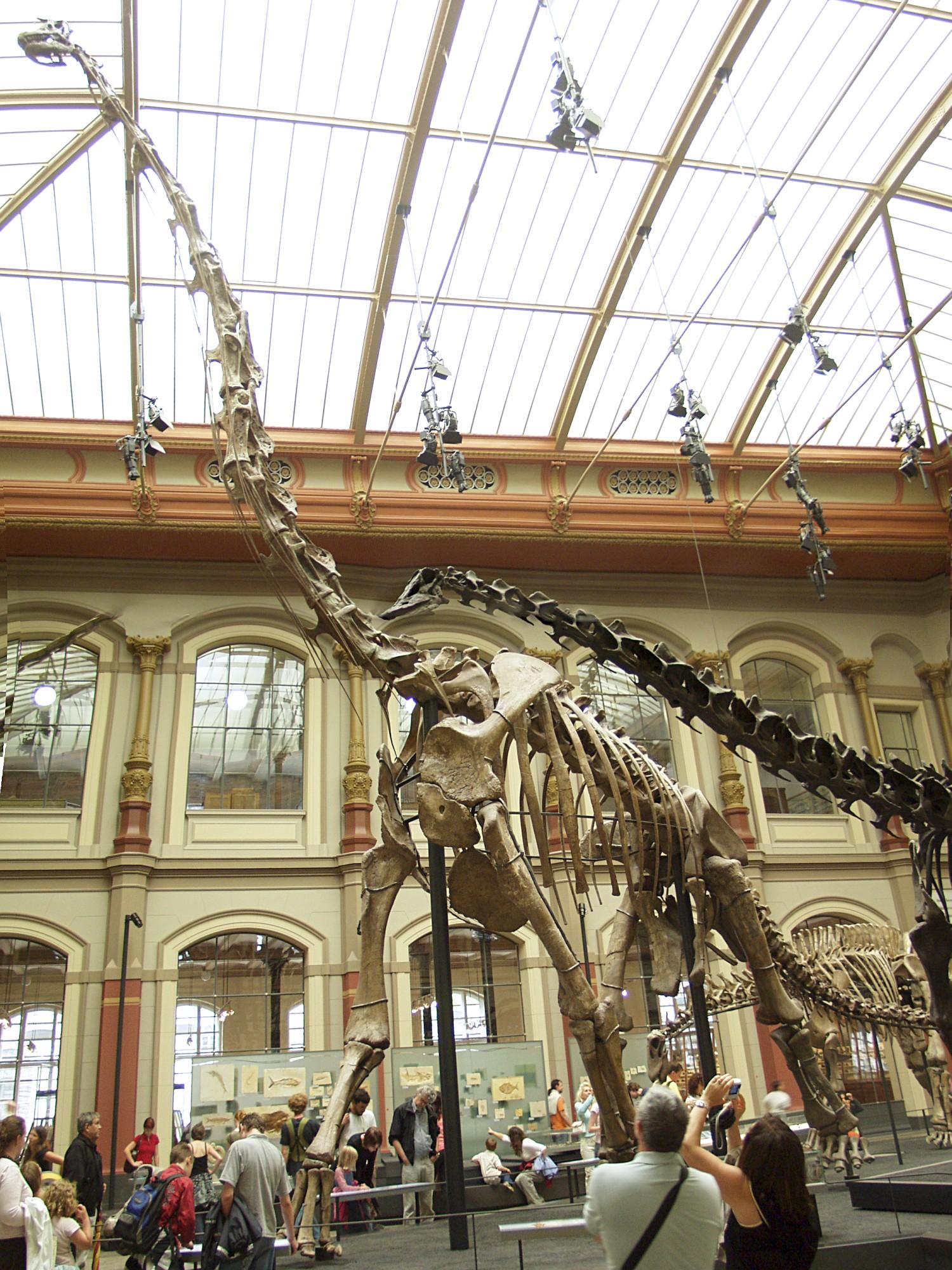 Giraffatitan im Berliner Naturkundemuseum nach Abschluss der Überarbeitung 2007