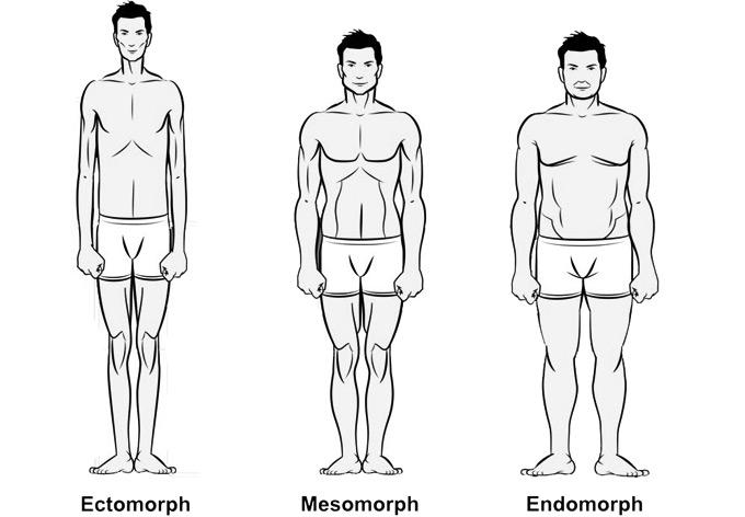 [Image: Bodytypes.jpg]