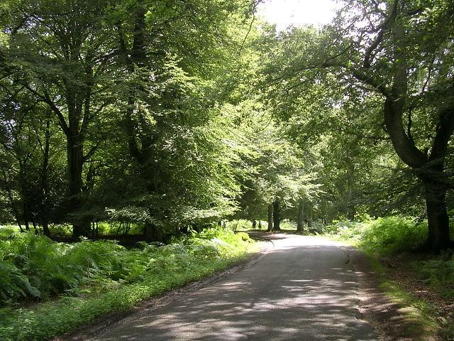 Bolderwood Arboretum Ornamental Drive, New Forest - geograph.org.uk - 32739