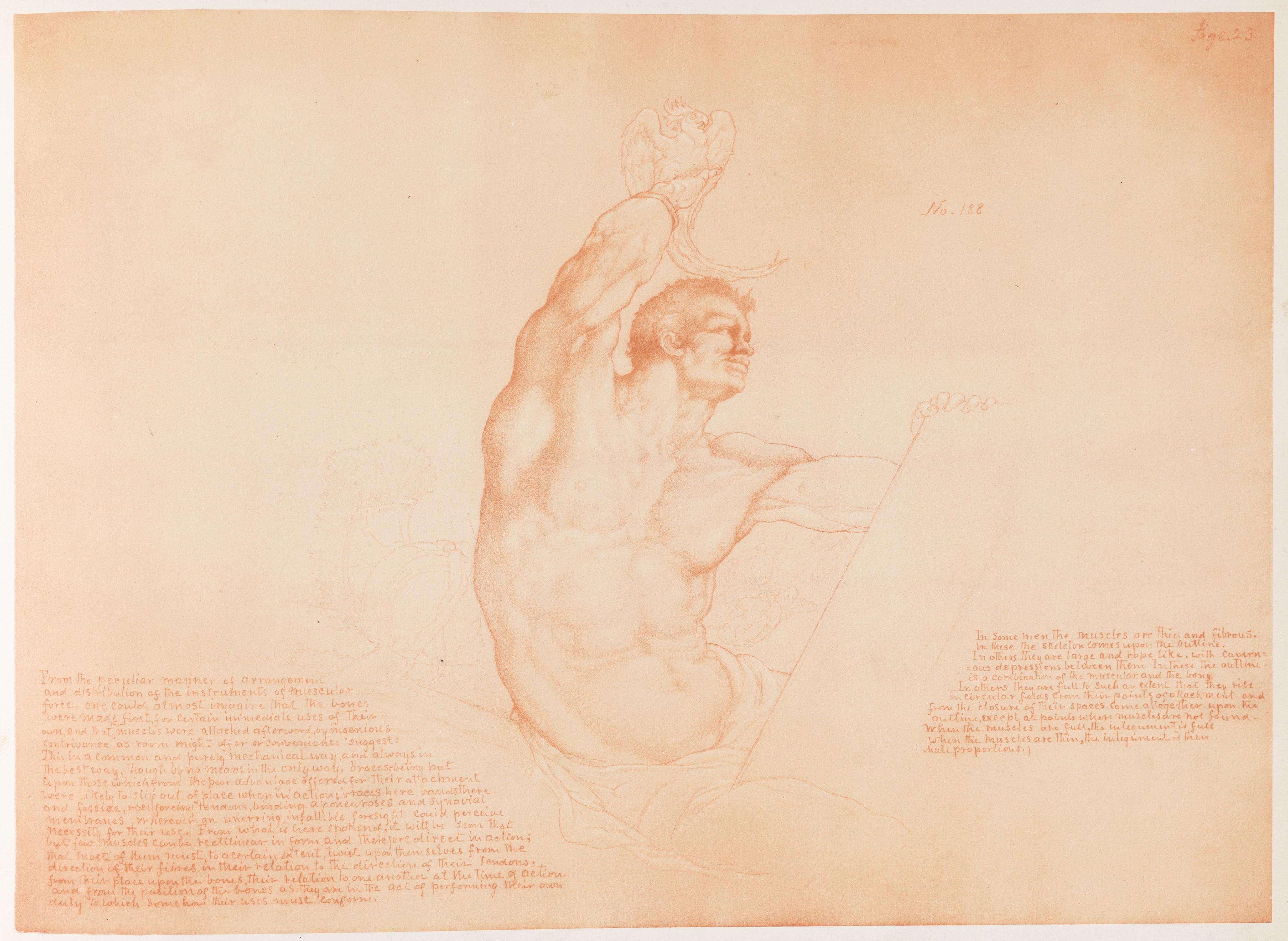 Filebook Illustration Art Anatomy Pectoralis Major In Use 1884