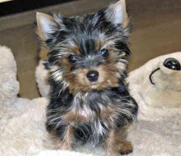 Best Small Breed Dog Treats