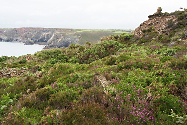Clifftop near St Agnes - geograph.org.uk - 469252