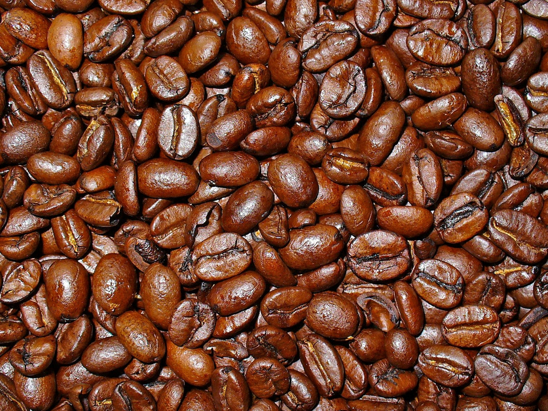 Coffea canephora robusta Kaffe tynn