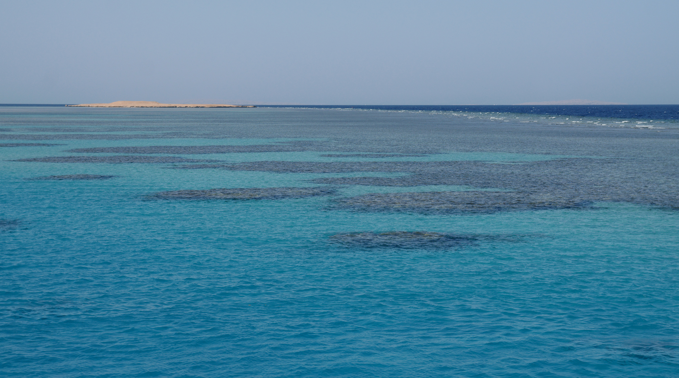 Description coral reefs in the red sea