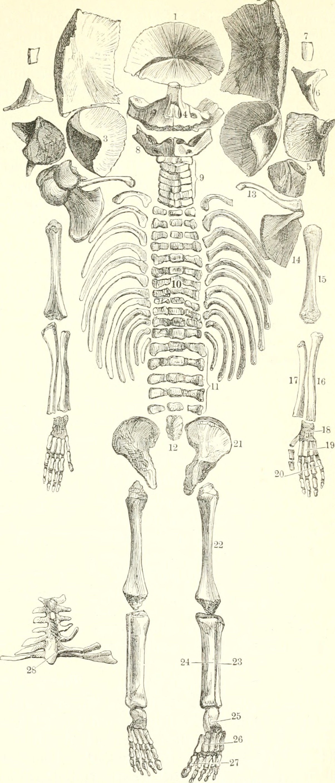 Großzügig Milchvieh Anatomie Bilder - Menschliche Anatomie Bilder ...