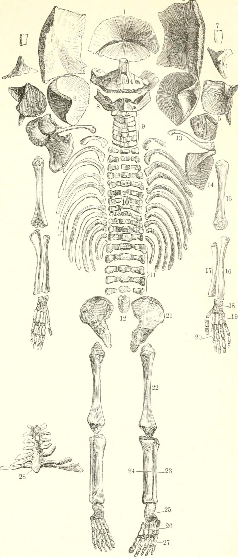 File:Der Mensch (1886-) (20870662551).jpg - Wikimedia Commons