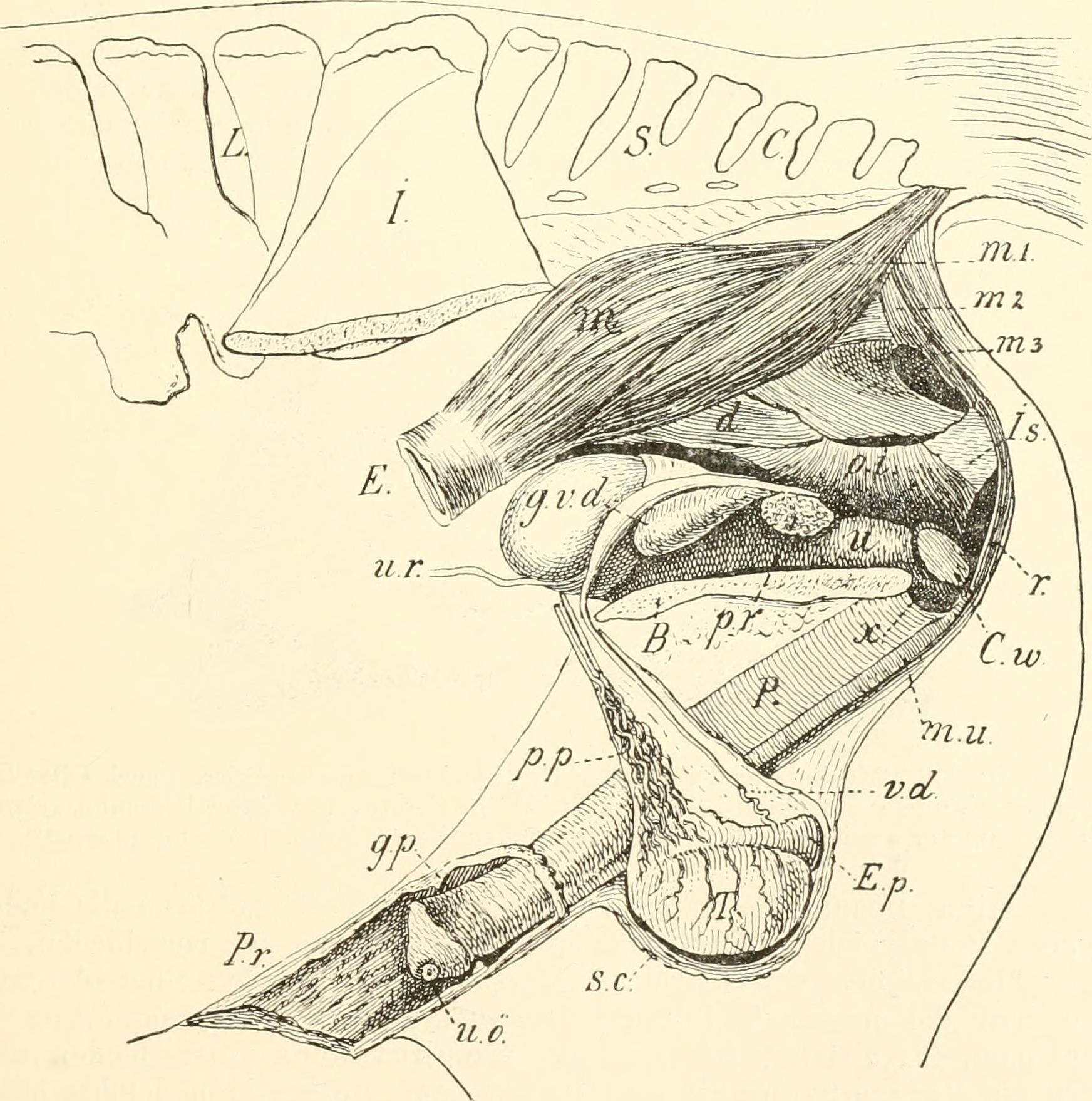 Tolle Einführung In Die Anatomie Des Menschen Ideen - Menschliche ...