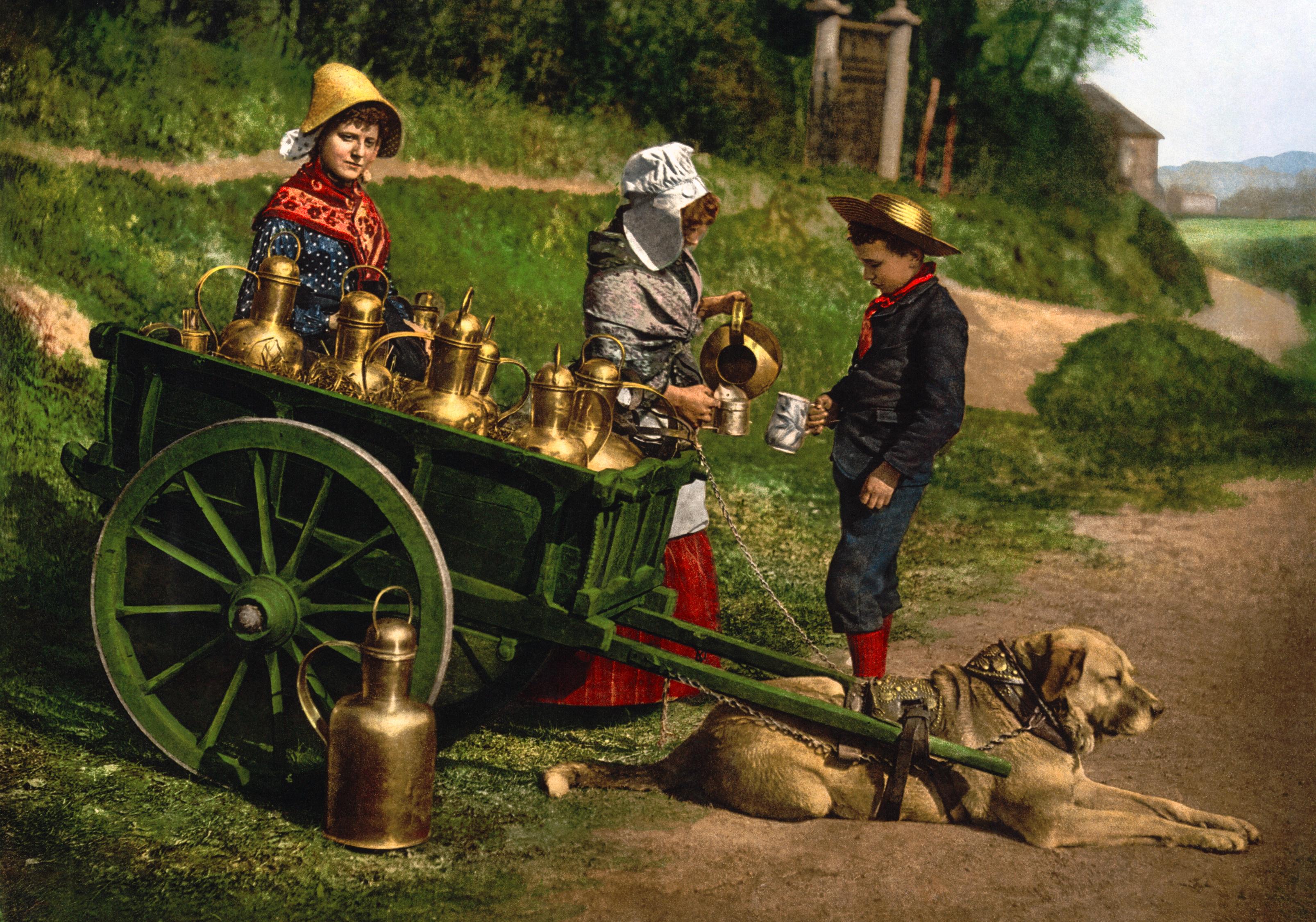 Dogcart (dog-drawn) - Wikipedia