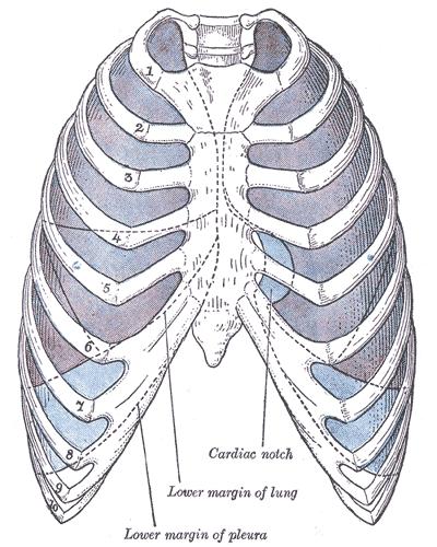 sinus pleurae