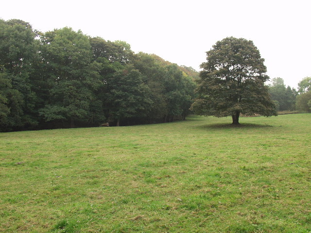 Hafod Wood within Erddig Park near Wrecsam - geograph.org.uk - 65680