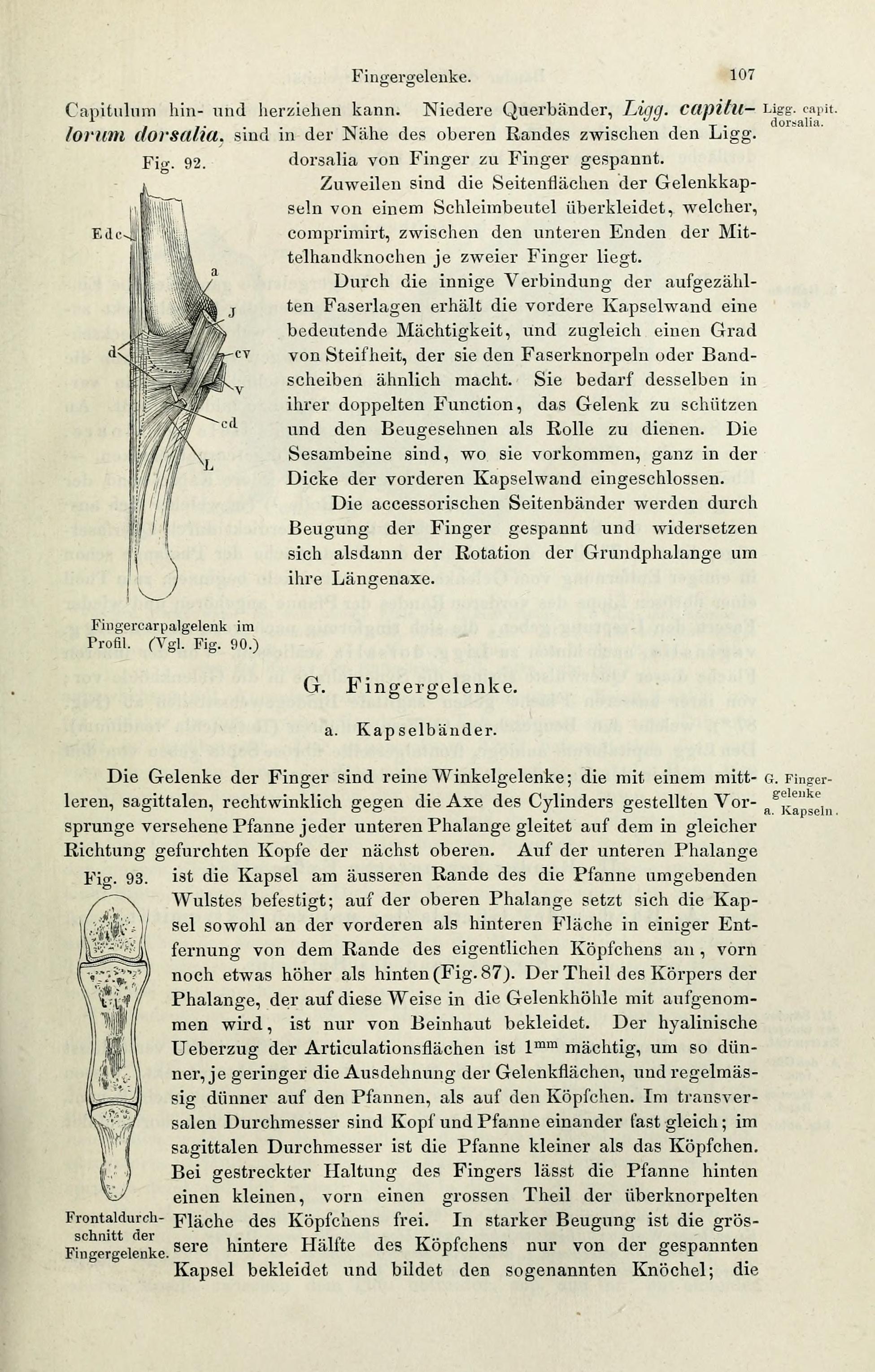 File:Handbuch der systematischen Anatomie des Menschen (Page 107 ...