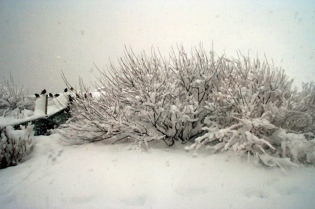 File:Heavy snow at Baltasound - geograph.org.uk - 1505190.jpg