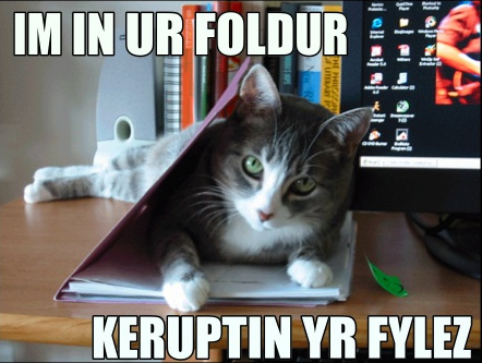Lolcat in folder.jpg