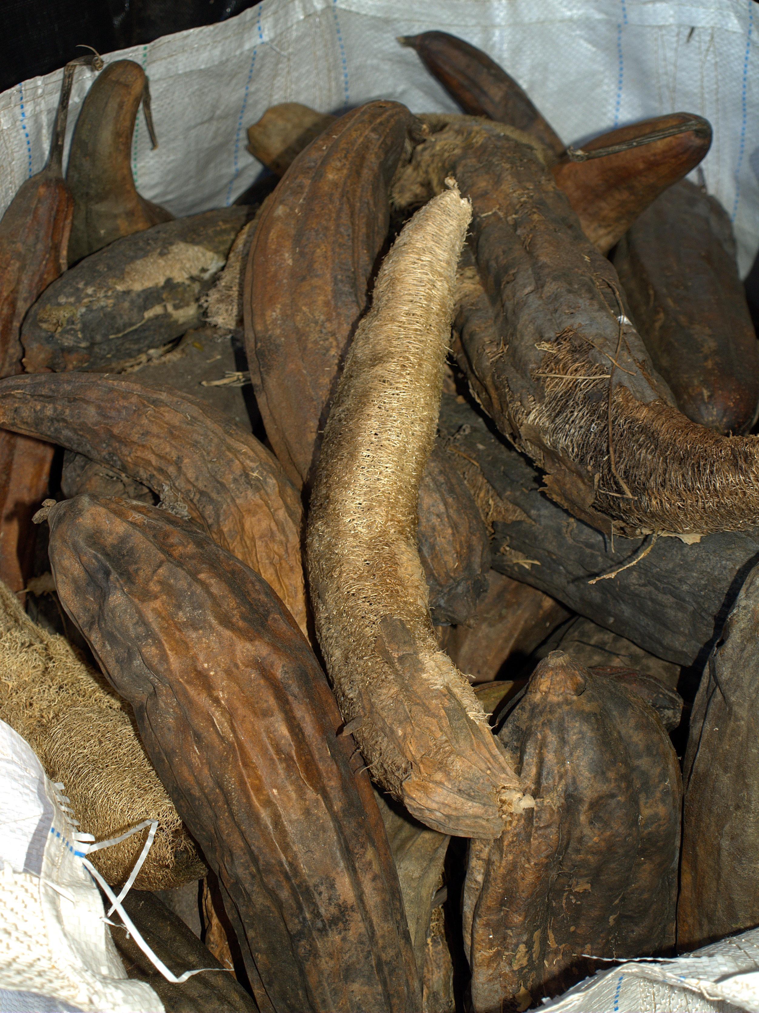 File Natural Loofah Luffa Sponges On An Organic Farm In