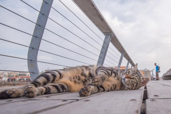 חתול, נמל תל אביב