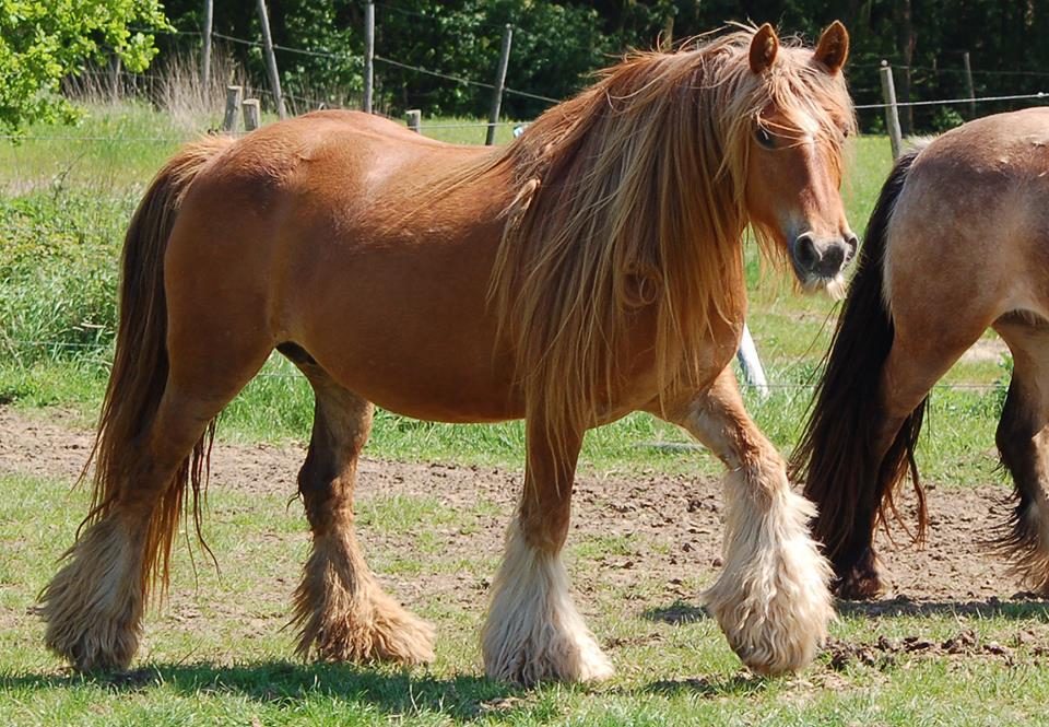 Horses Wallpapers and Backgrounds  Desktop Nexus Animals