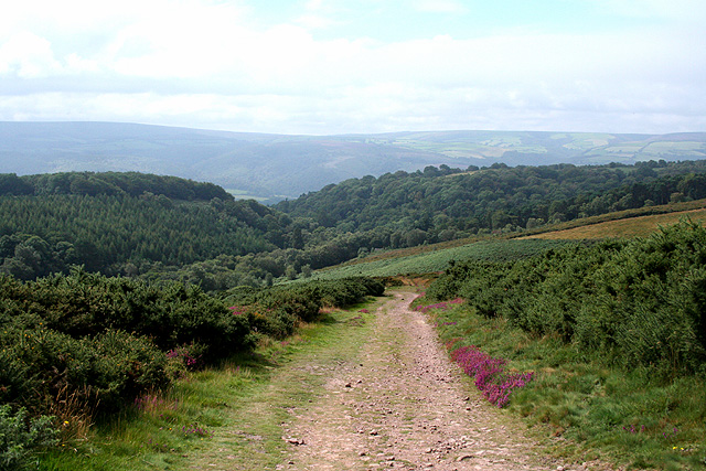 Selworthy, above Selworthy Combe - geograph.org.uk - 547641