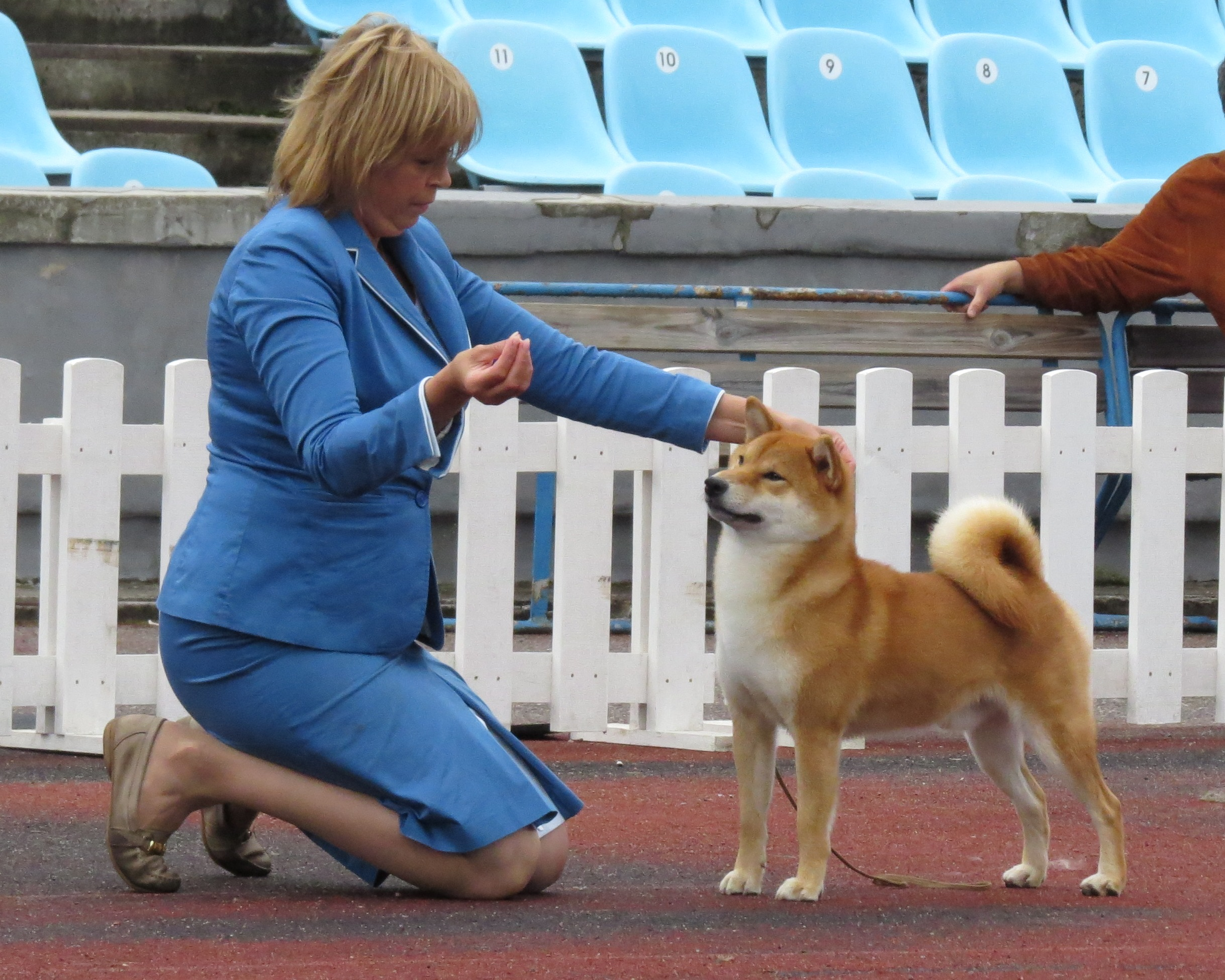 Shiba Inu De Schattigste Hond In Japan