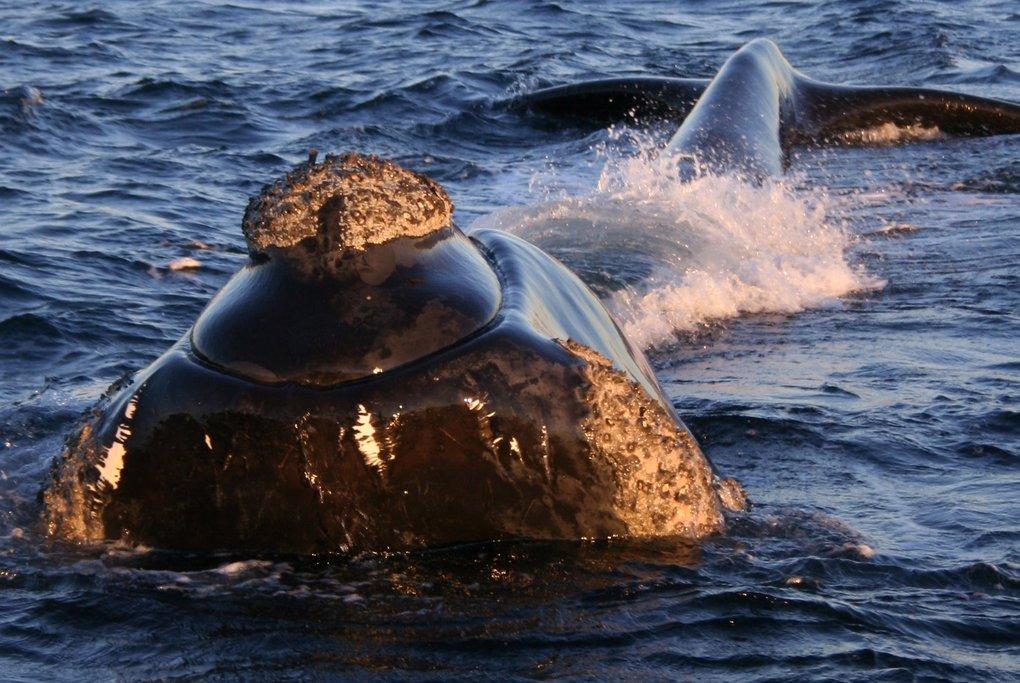 Whale Watching La Palma Canary Islands