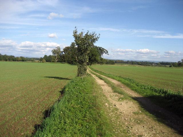 Track near Thorp Perrow - geograph.org.uk - 250180
