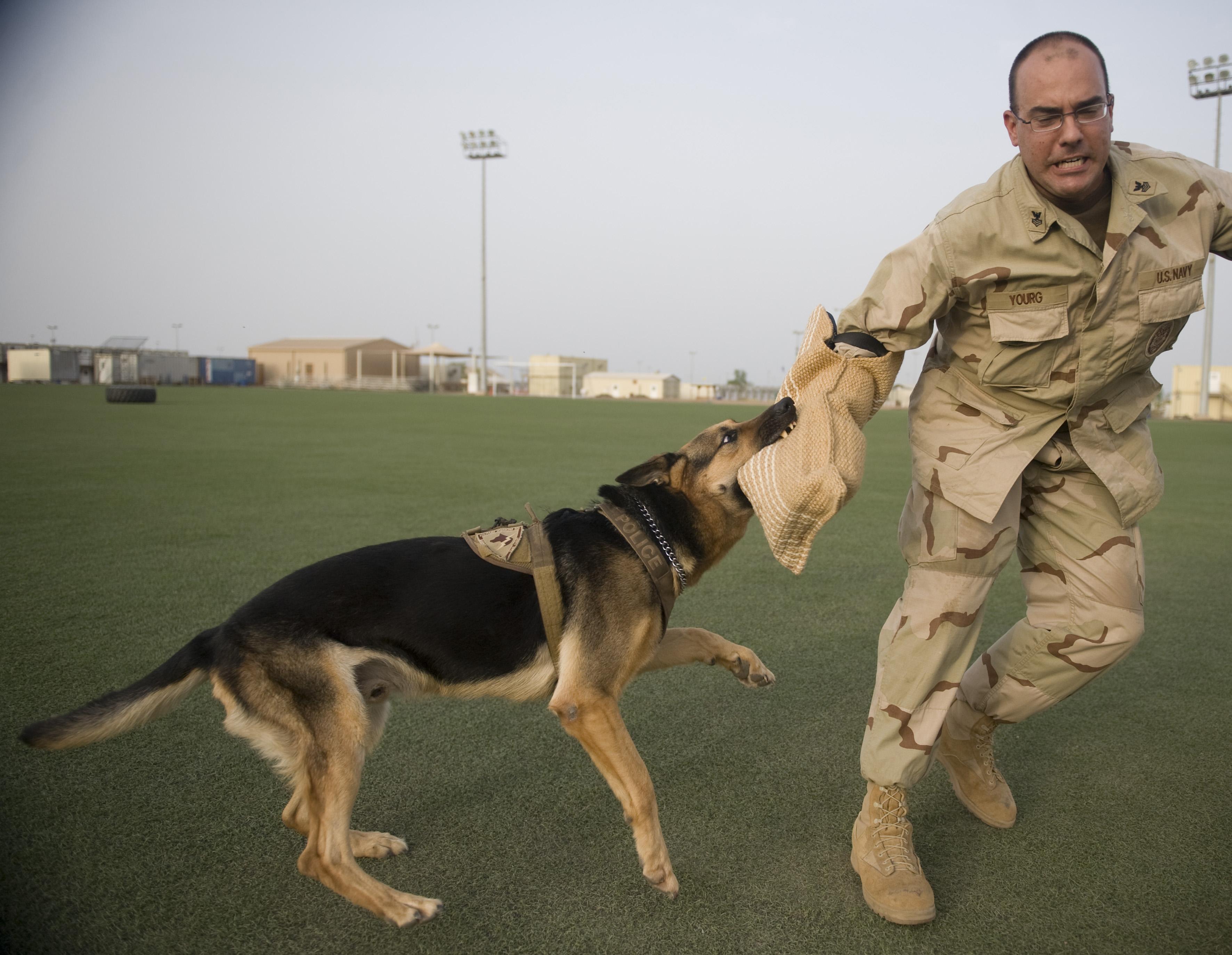 Image Result For Dog Training Video