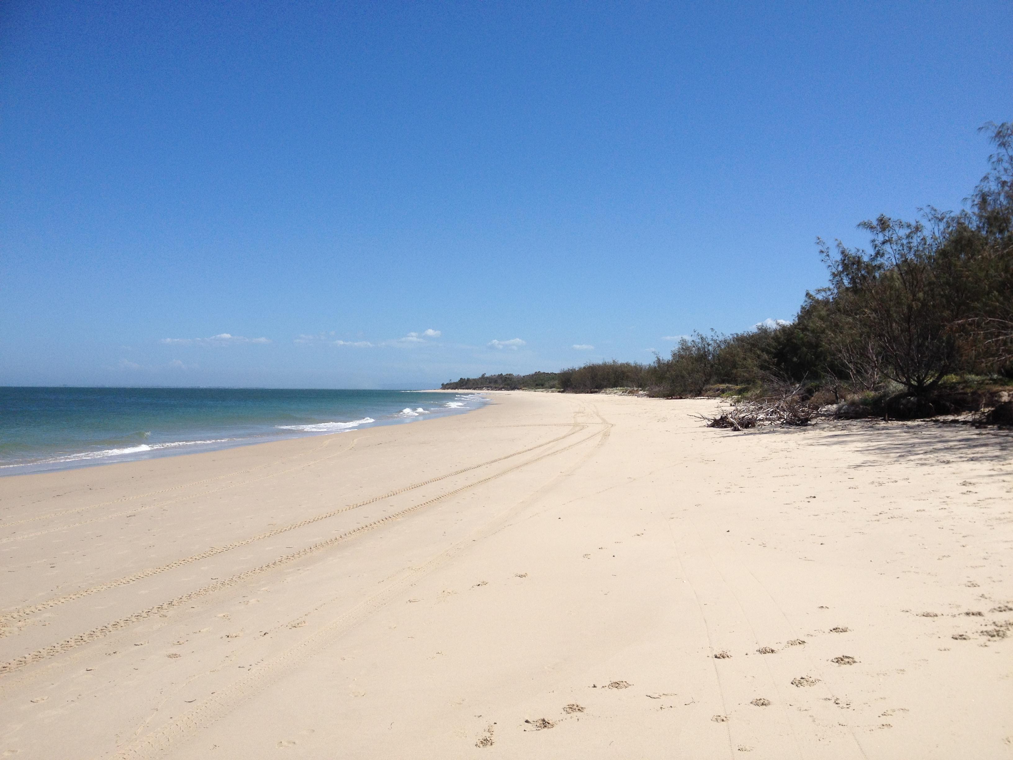 Bribie Island Dog Beach Queensland