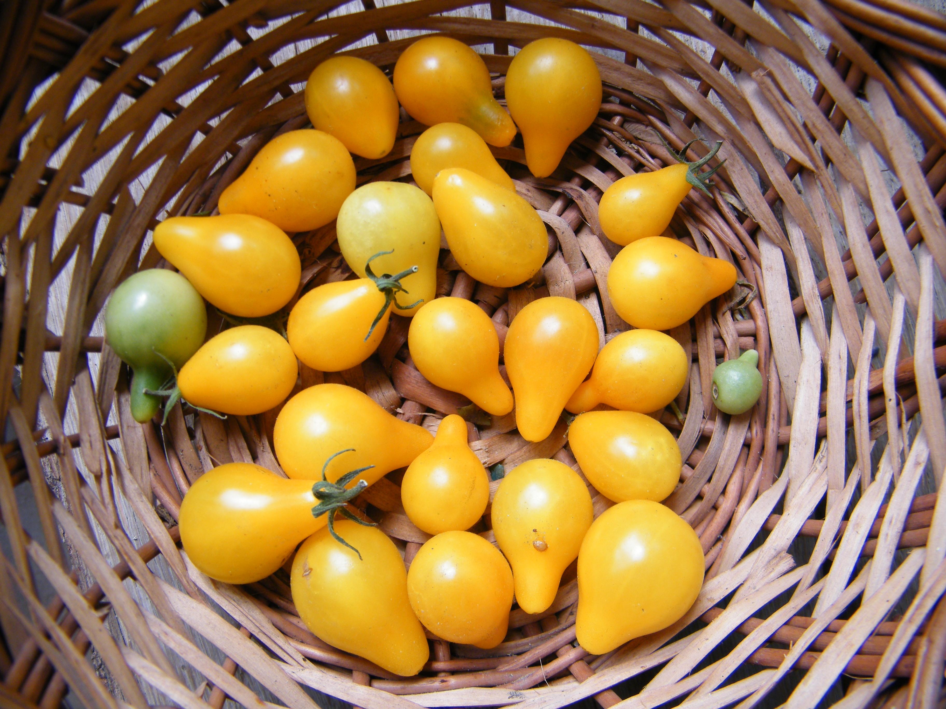 Fleischtomate 20 Samen Better Boy Tomate