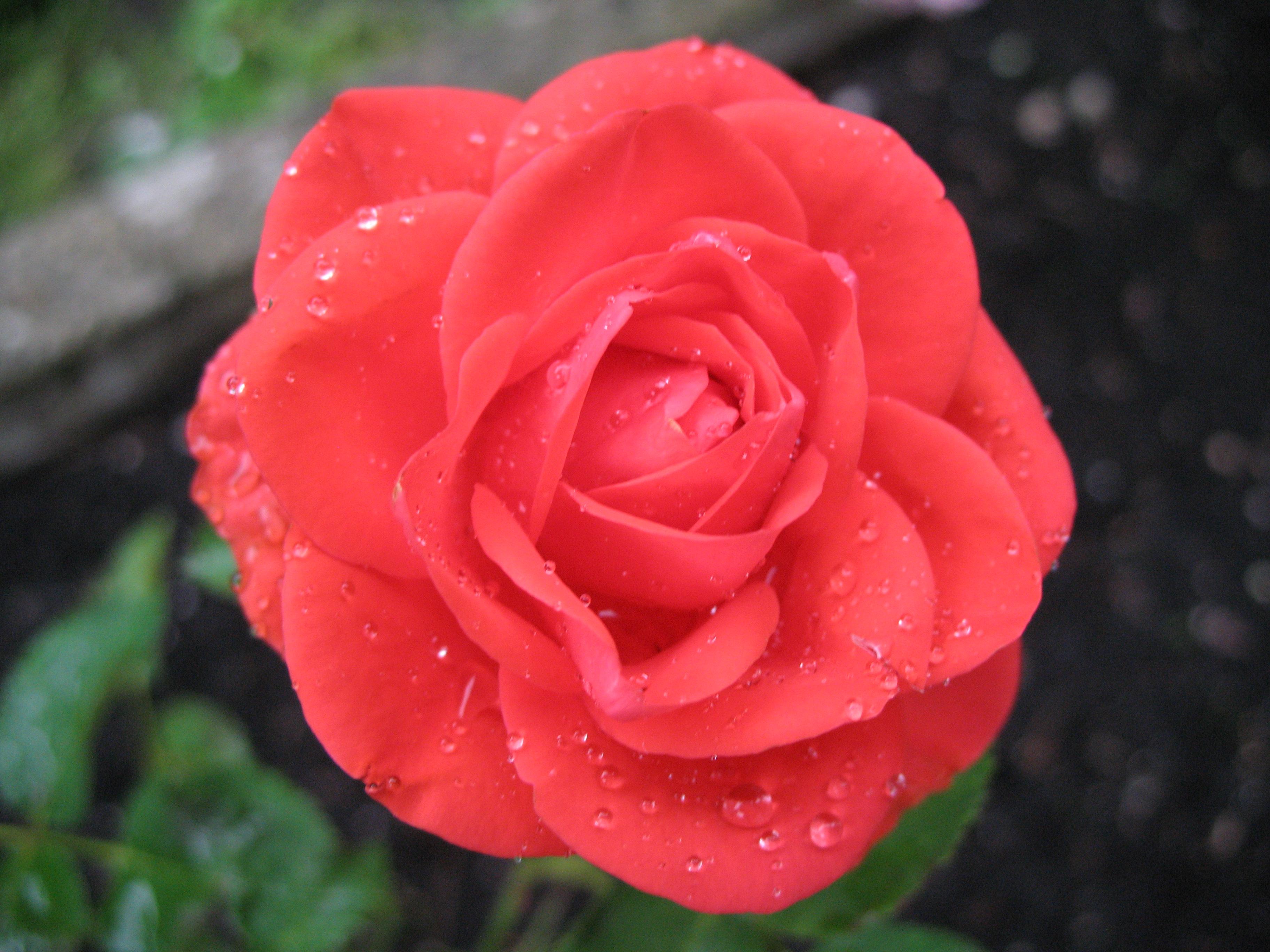 St Rose Of Lima Rockaway Food Pantry