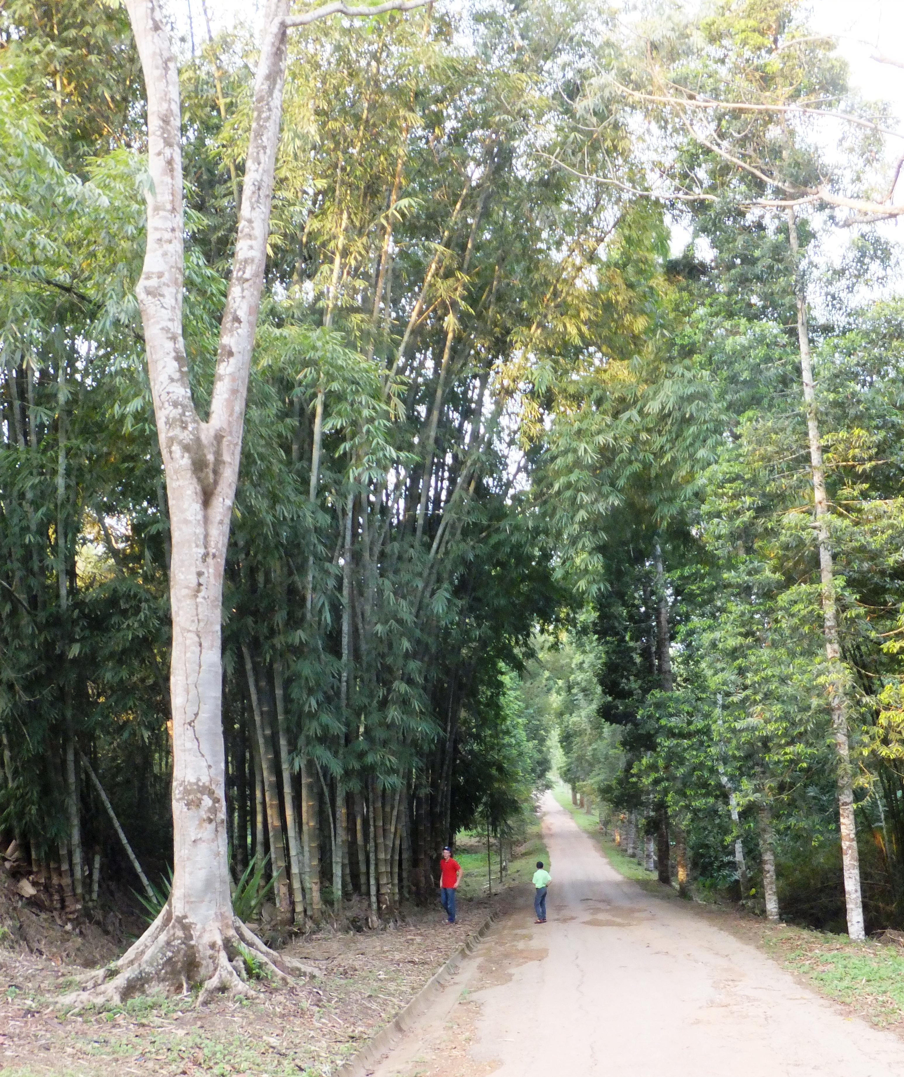 File Allée au jardin du p¨re Gillet  Kisantu JPG Wikimedia mons