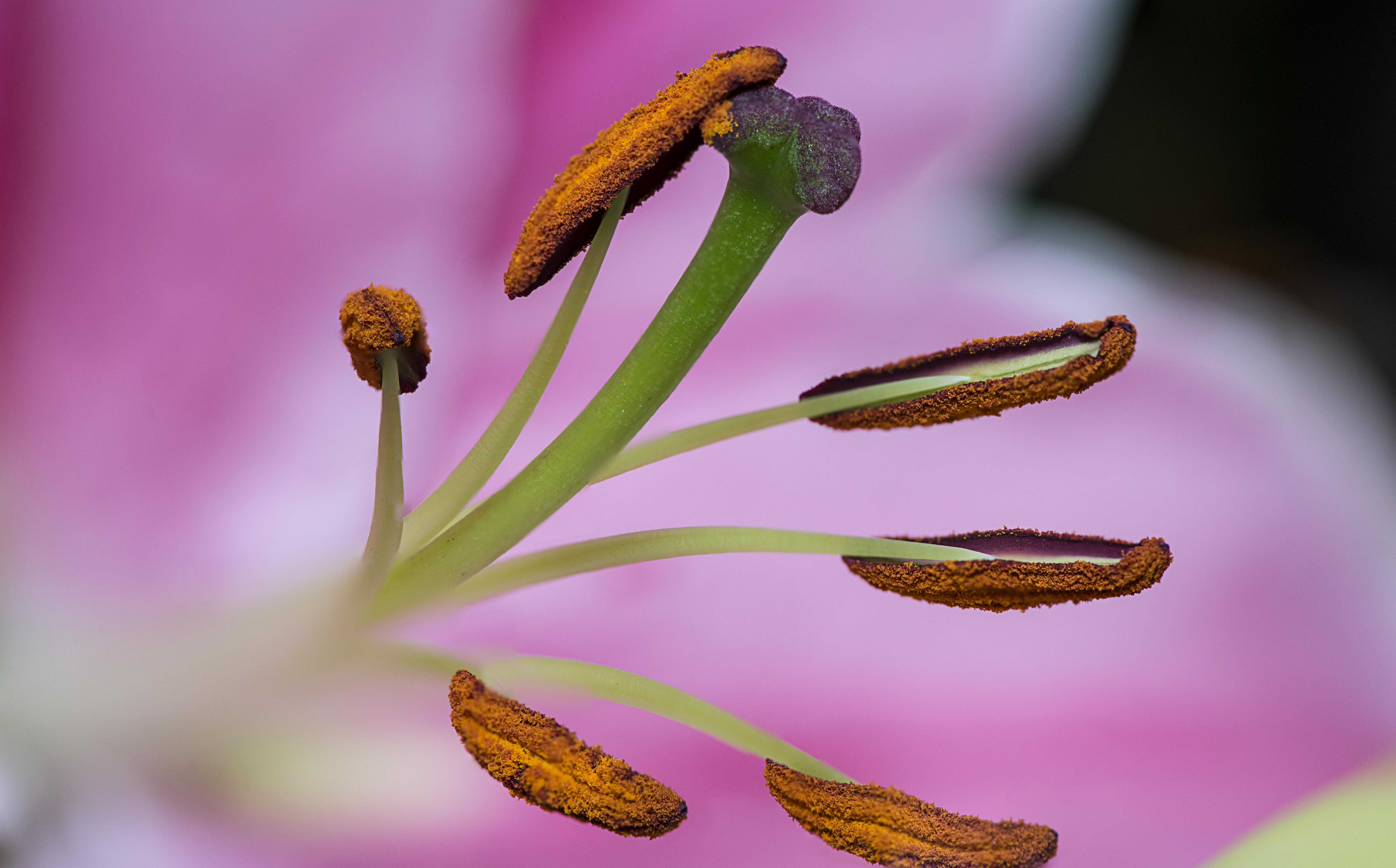 Fileallergies in full bloom unsplashg wikimedia commons fileallergies in full bloom unsplashg izmirmasajfo Gallery