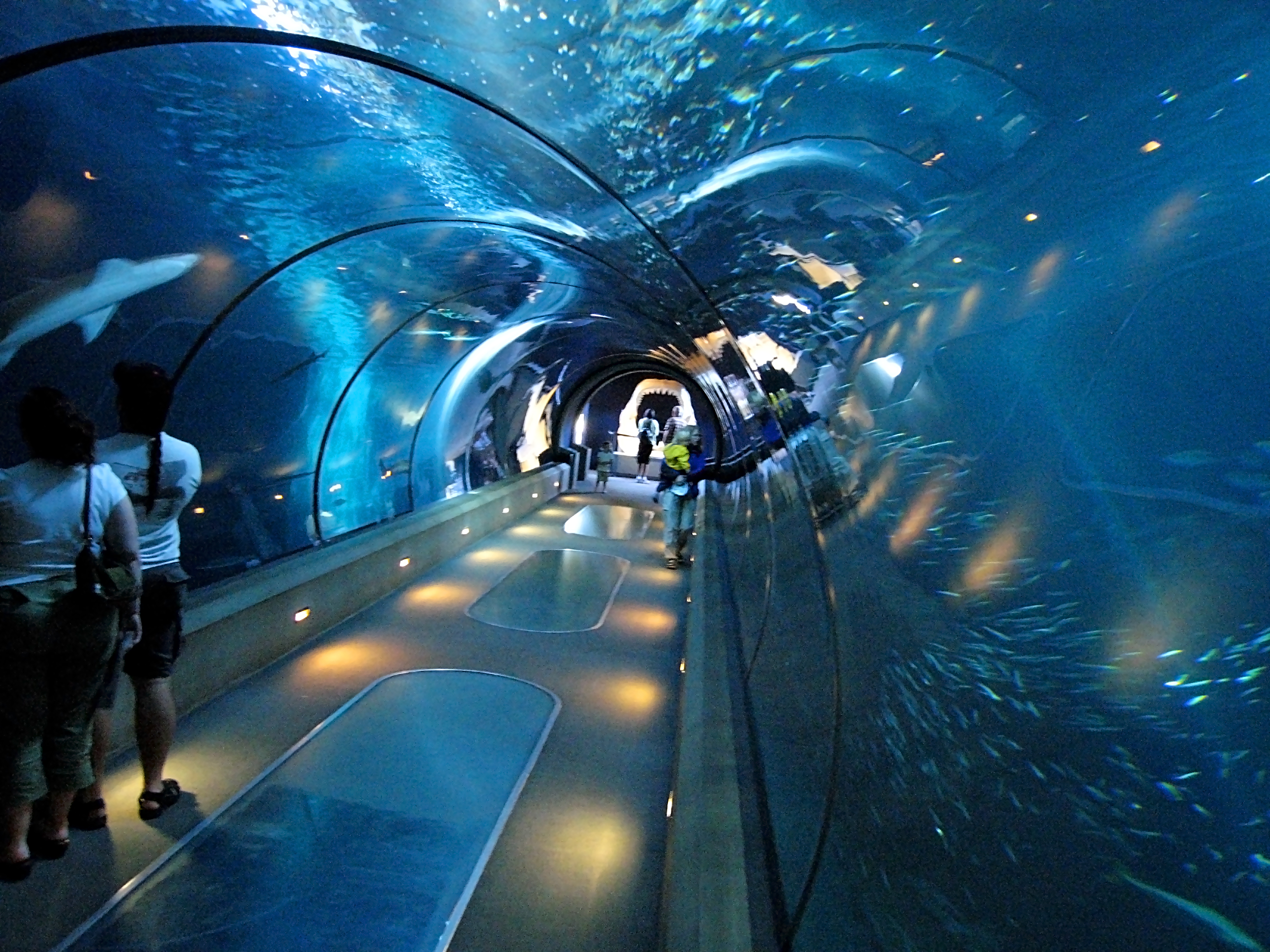picture of the tunnel at the aquarium of the bay for travel article