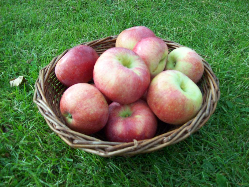 Aroma äpplen i en korg