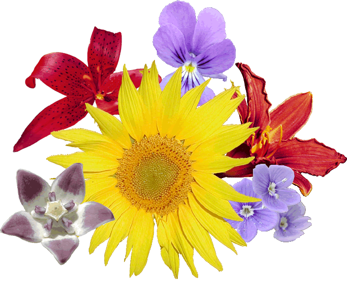 Description Bouquet fleurs.png