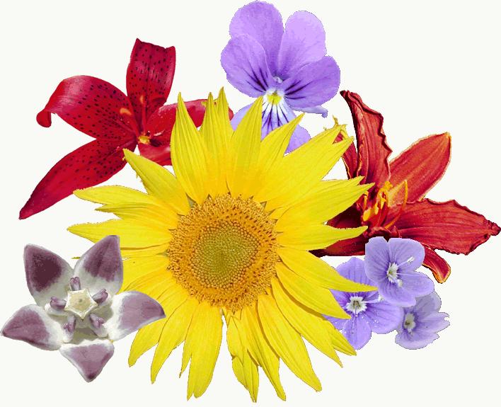 Fichier bouquet wikip dia for Bouquet de fleurs wiki