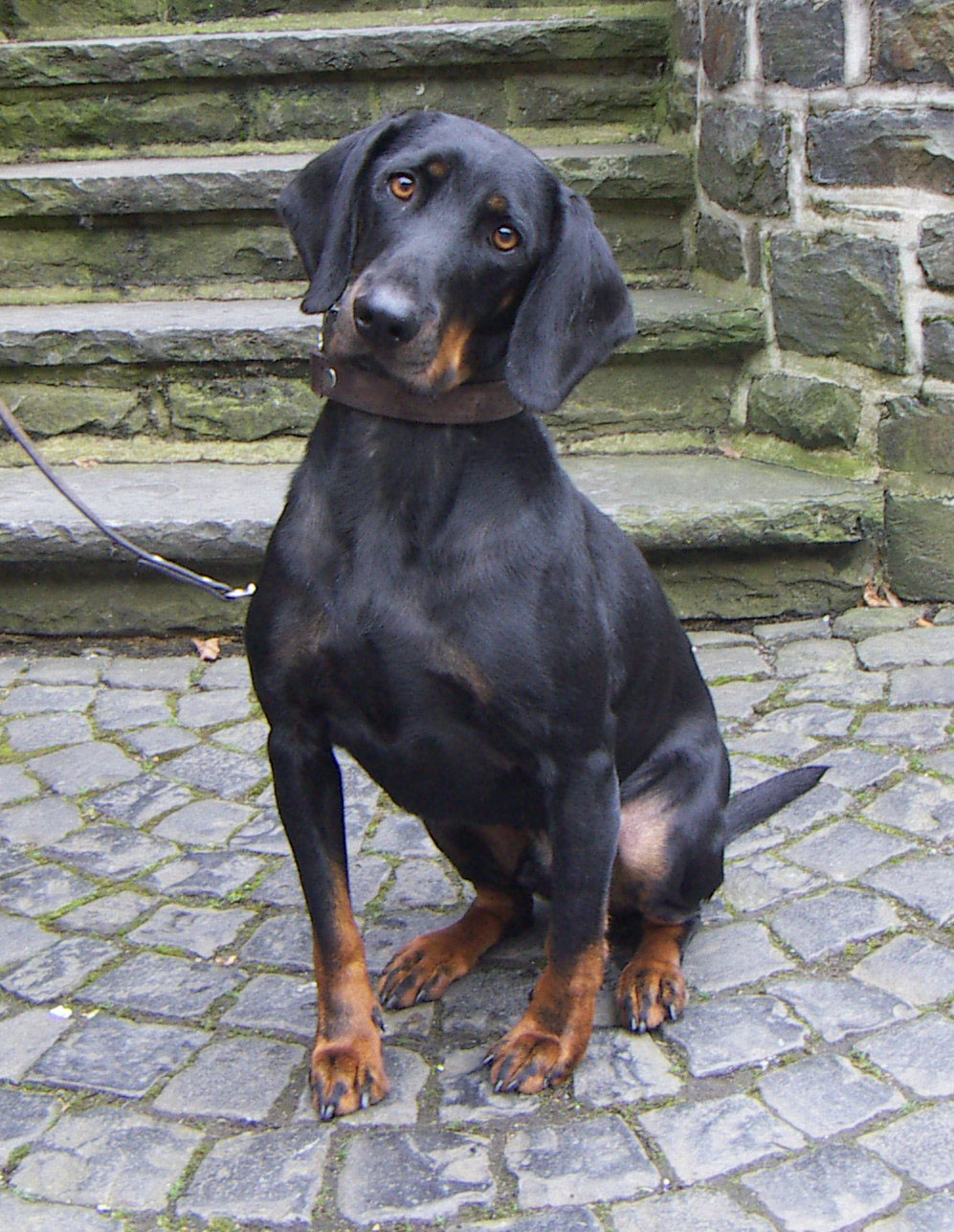 German Dog Names That Mean Protector