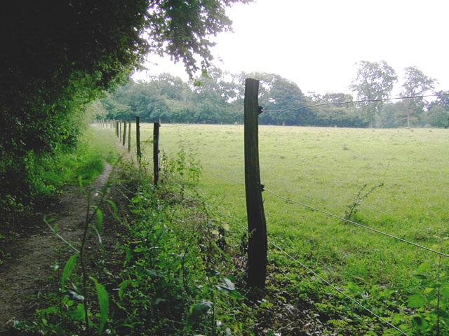 Clearing in Clapham Wood - geograph.org.uk - 870293