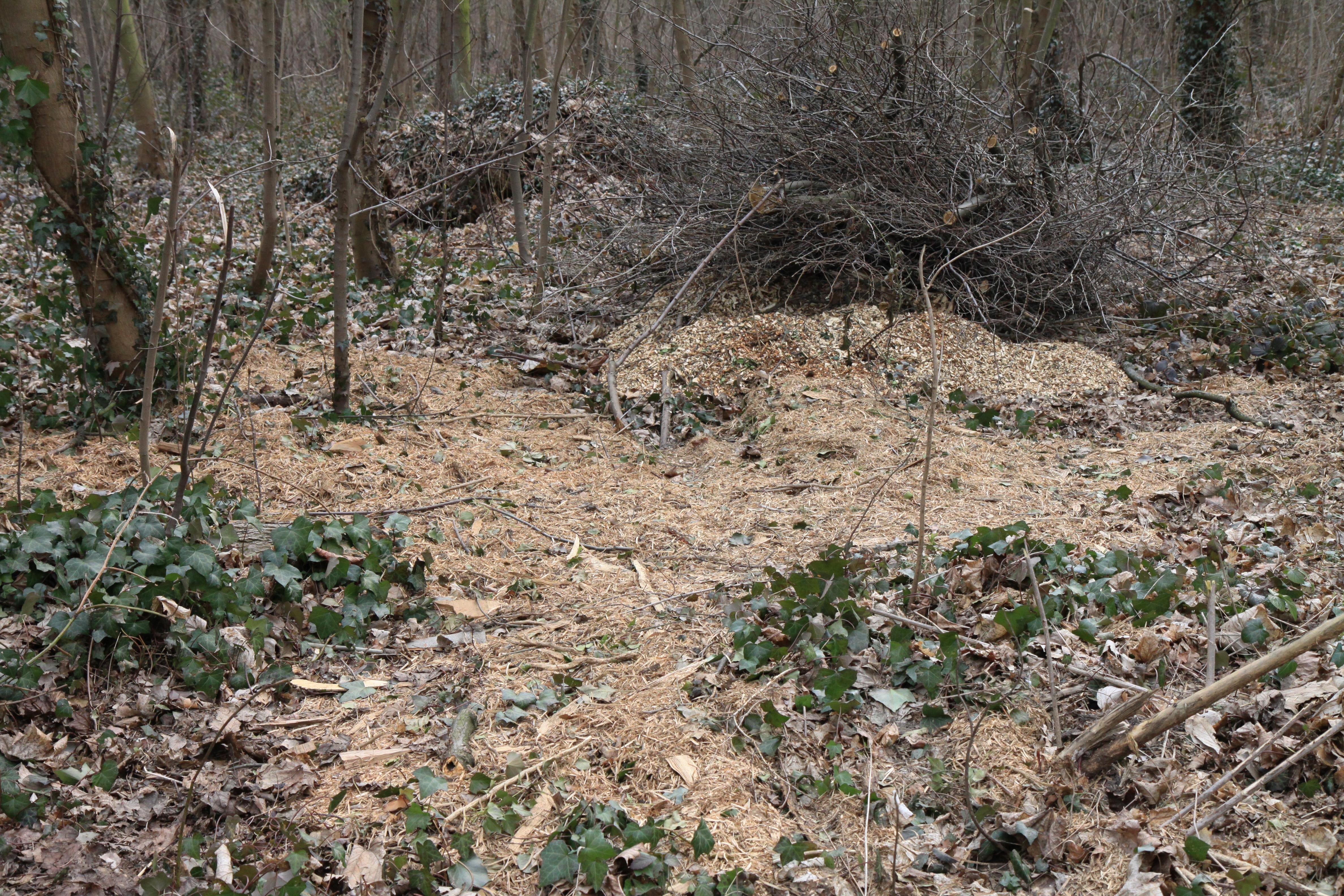 Compost De Feuilles D Érable bois raméal fragmenté — wikipédia