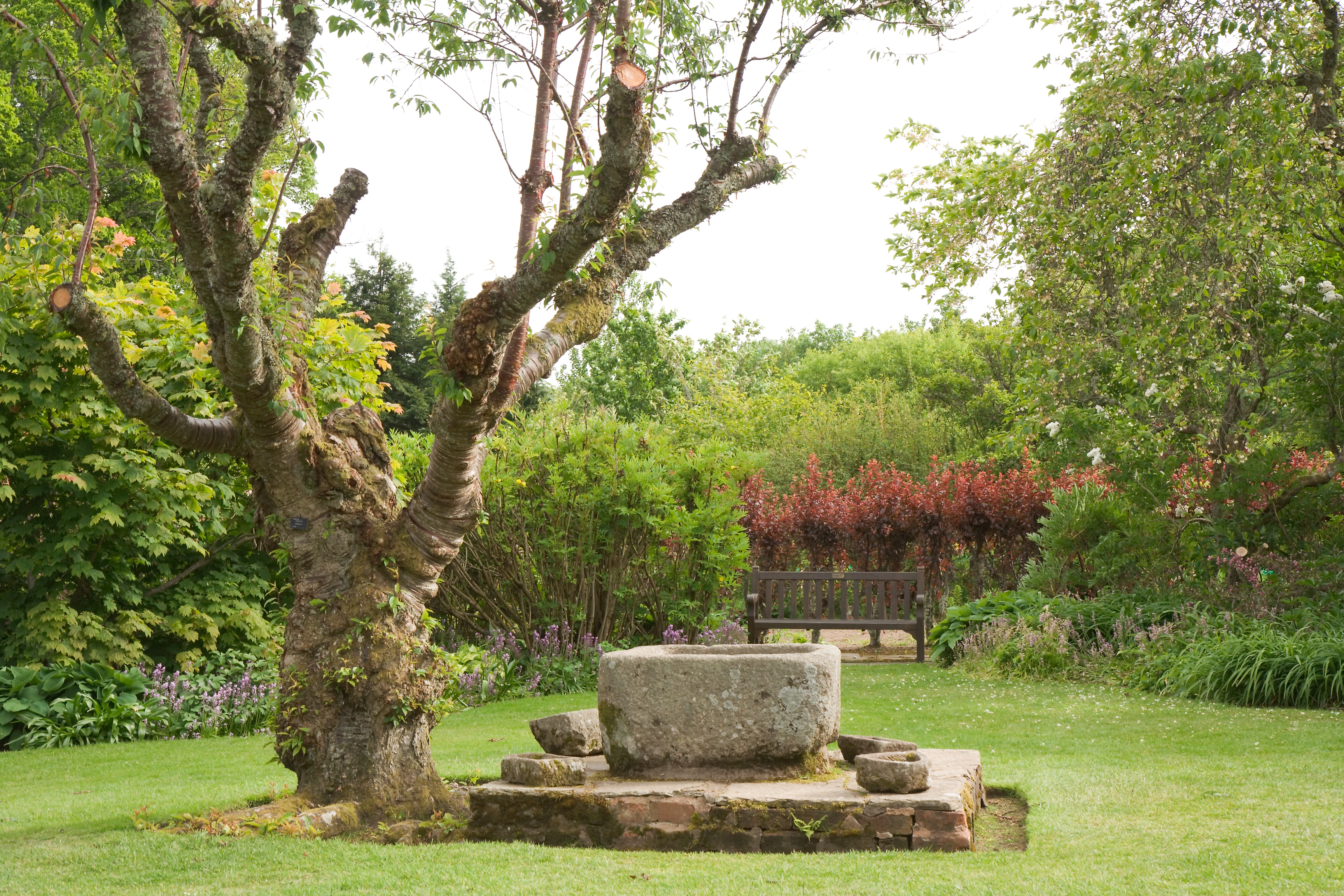 File Crathes Castle Garden Tree Jpg Wikimedia Commons