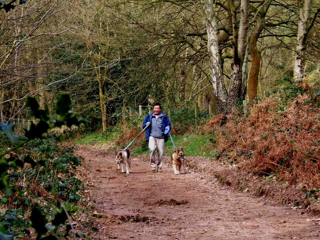 Dog walking in Kingsford Forest Park - geograph.org.uk - 886496