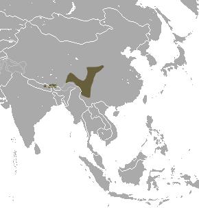 Elegant water shrew species of mammal