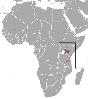 The average adult weight of a Elgon shrew is 6 grams (0.01 lbs)