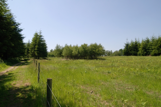Field in Cann Wood - geograph.org.uk - 188133