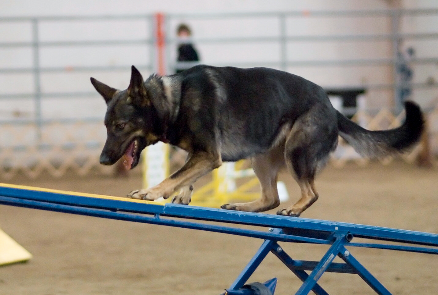 german shepherd agility