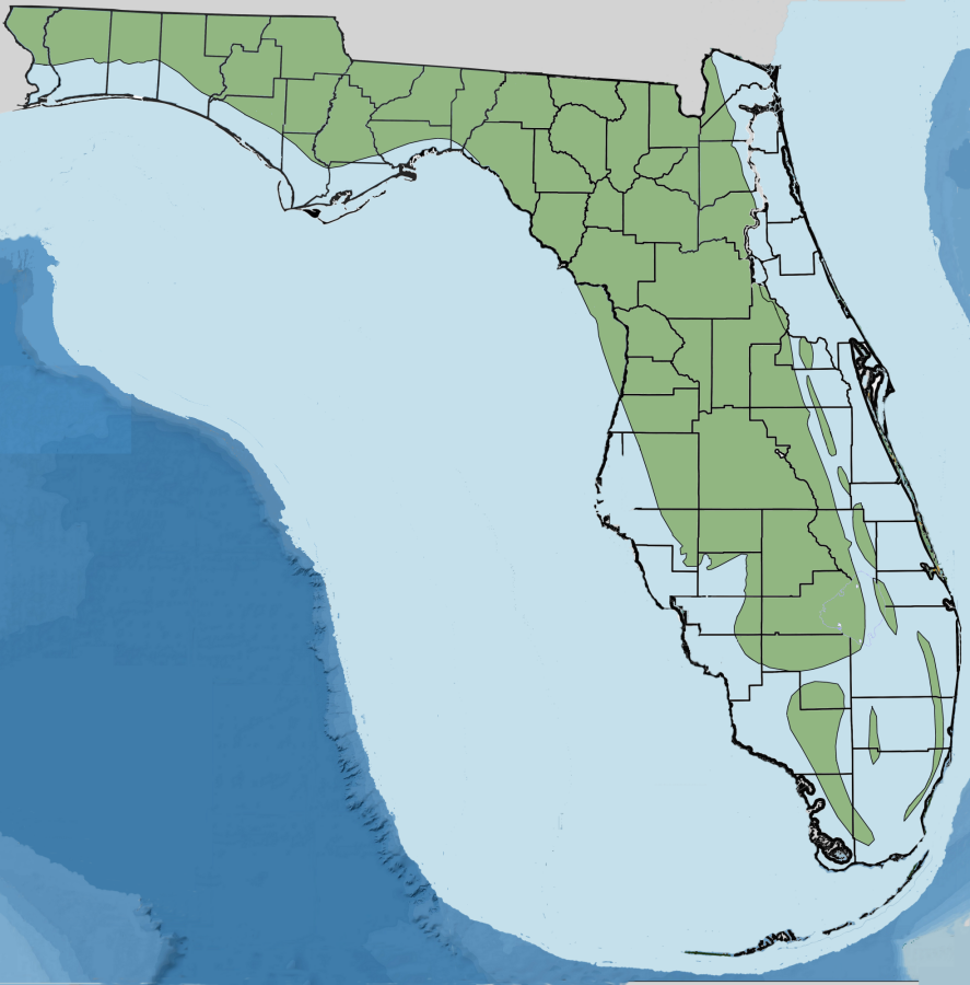 Laws on dating ages in florida